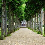 Exotische olijfboom